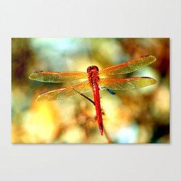 Dragonfly Print Canvas Prints