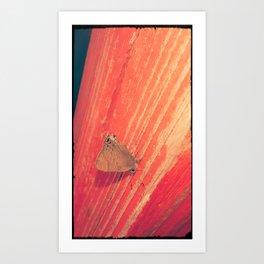 Hanging on a limb Art Print