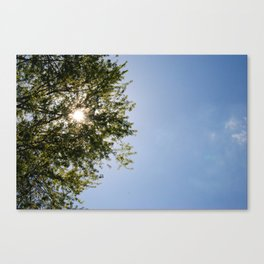 May Sunstar in the Trees Canvas Print