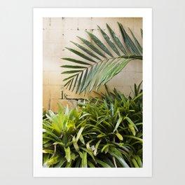 Palms & Bromeliads  |  The Plant Life Art Print