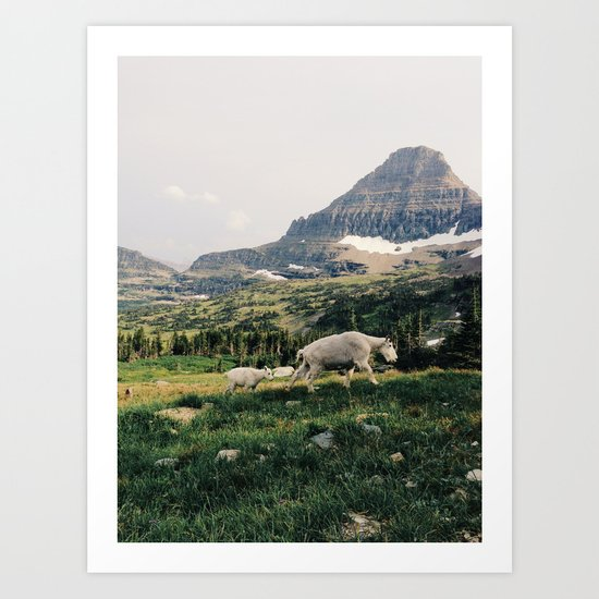Montana Mountain Goat Family Art Print