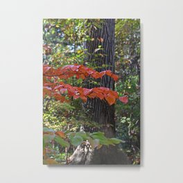 The Divinity of Nature Metal Print
