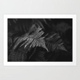 fairy fern II Art Print