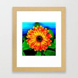 Orange Marigold Framed Art Print