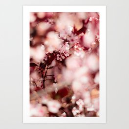 Pink Blooming Blossom Art Print