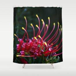 Australian Grevillea Flower Shower Curtain