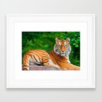 asian Framed Art Prints featuring Asian Tiger by Tom Lee