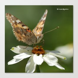 Butterfly macro photography Canvas Print