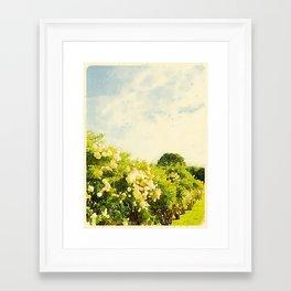 Hydrangea Bushes, Kennebunkport, Maine Framed Art Print