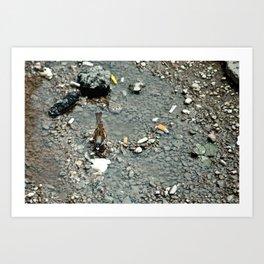 Bird in Bucharest Art Print