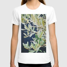 Photo of a Mediterranean Olive Tree II, in Trastevere Rome, Italy | Fine Art Travel Photography |  T-shirt
