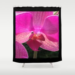 Fuschia Orchid Flower Blossom from Jalisco Mexico Shower Curtain