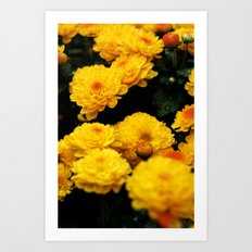 Golden Dew Drops II. Art Print