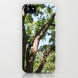 Tree at Graceland iPhone Case