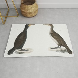 267 Double-crested Cormorant (Phalacracorax dilophus) 268 Ditto immature  from Zoology of New York ( Rug