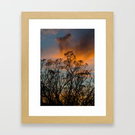 Desert Flora At Sunset - Bush  Framed Art Print