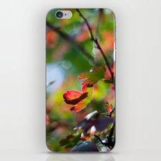 Autumn Rainbow iPhone & iPod Skin