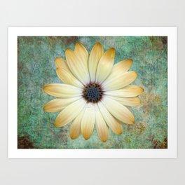 Cream Coloured Daisy Art Print