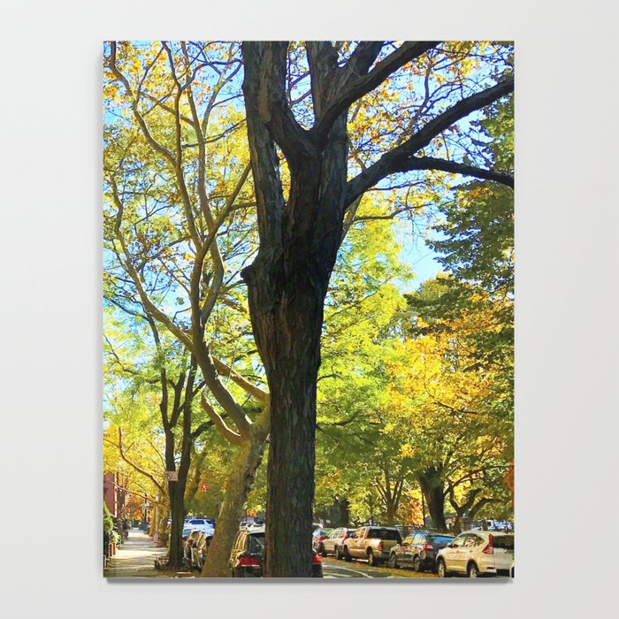 Cobble Hill Brooklyn New York in the Fall, Brownstones Notebook
