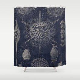 Vintage Radiolaria Diagram Shower Curtain