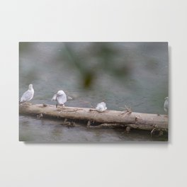 Four Friends On A Log Metal Print