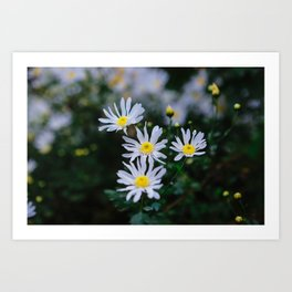 Daisy flower, Daisy hill, Asteraceae flower,  daisy hill, Photography, beautiful view, View Poster, Canavas Print Art Print