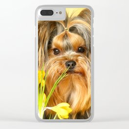 Spring Yellow Crocuses With Yorkie Puppy #decor #society6 Clear iPhone Case