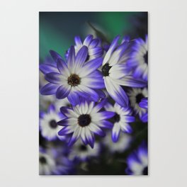 Blue & White Daisy Flowers #1 #floral #decor #art #society6 Canvas Print