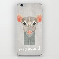 greyhound iPhone & iPod Skins featuring Greyhound  by Alice Maclean Smith
