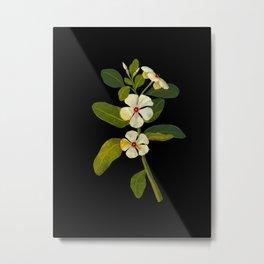 Mary Delany Vinca Rosea Vintage Botanical Art Black Background Realistic Floral Arrangement Metal Print