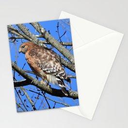 Red-Shouldered Hawk Stationery Cards