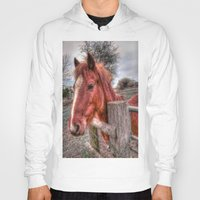 pony Hoodies featuring Pony  by Darren Wilkes Fine Art Images