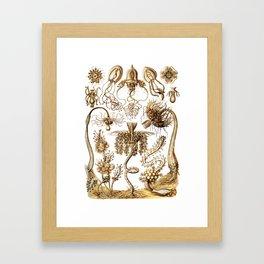 Ernst Haeckel - Tubulariae Framed Art Print
