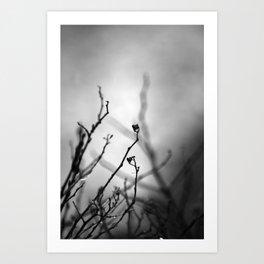 Augury in Grey Art Print