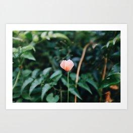 Bloom Baby Bloom Art Print