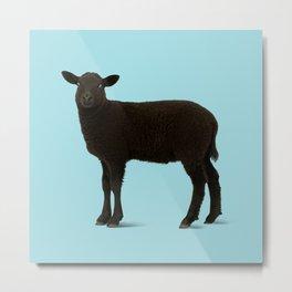Black Lamb // Blue Metal Print