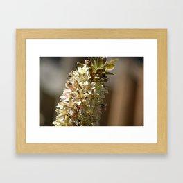Three Bees Framed Art Print