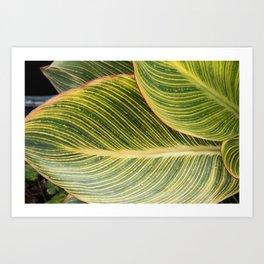 Green Zebra Leaf Art Print