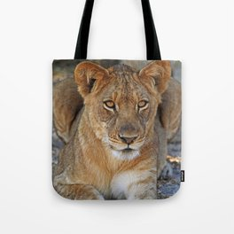 Young lion - Africa wildlife Tote Bag