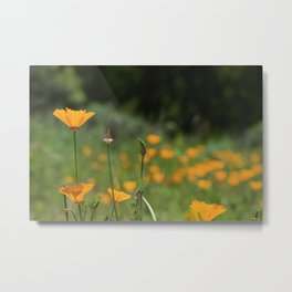 California Poppy Field Metal Print