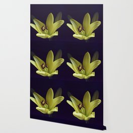 Asiatic Yellow Lily Wallpaper