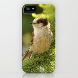 Profile of a Grey Jay / Whiskeyjack iPhone Case