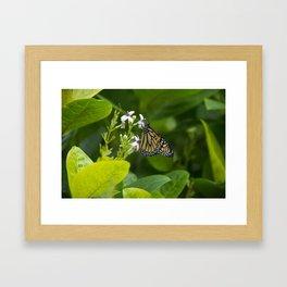 Flower Butterfly  Framed Art Print