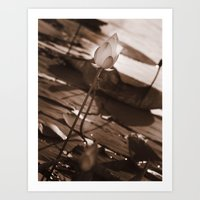 Water Lily Sepia Art Print