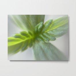 Microscopic photo of seedling baby plant Metal Print
