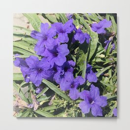 Periwinkle Blue Flowers In Garden With Leaves Askew Metal Print