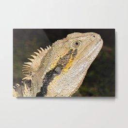 Australian Eastern Water Dragon Metal Print