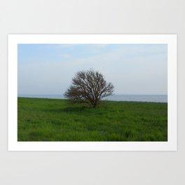Bjarred tree  Art Print