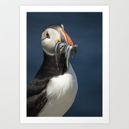 Puffin on the rocks with a beakful of fish. Art Print