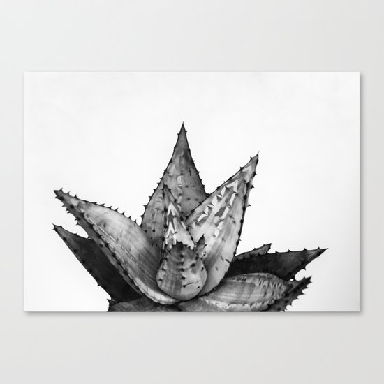 Nature aloe Canvas Print
